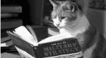 kitty is a strategic thinker